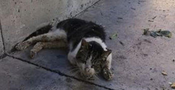 Denuncian al dueño de un perro que causó la muerte de un gato por dejarlo suelto y sin bozal en un parque