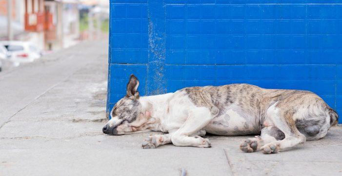 Fulminantes y fuertes: así son las trampas que sentencian a perros y gatos