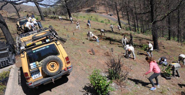 Participantes canarios del Camel Trophy repueblan una zona del incendio de Gran Canaria