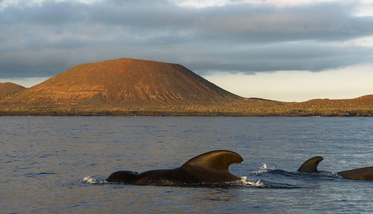 Las colonias de mamíferos marinos abundan en el sur de la Isla. Sergio Hanquet