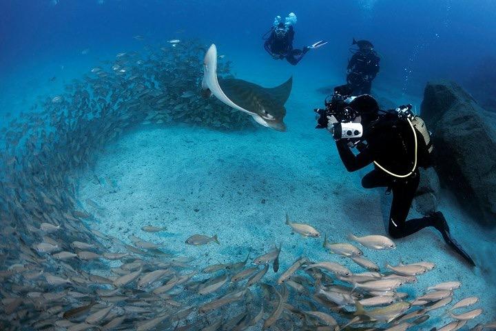 La costa de Arona acapara el mayor número de inmersiones en el sur de Tenerife. Sergio Hanquet