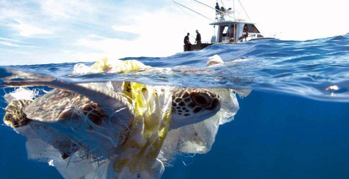 Los microplásticos ponen a las tortugas marinas en situación de emergencia máxima