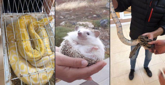 Decomisan en Tenerife tres ejemplares de animales exóticos que estaban a la venta en Internet