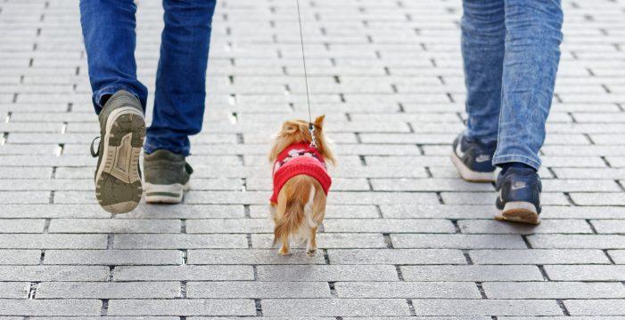 El Gobierno te obligará a hacer un curso si quieres tener un perro