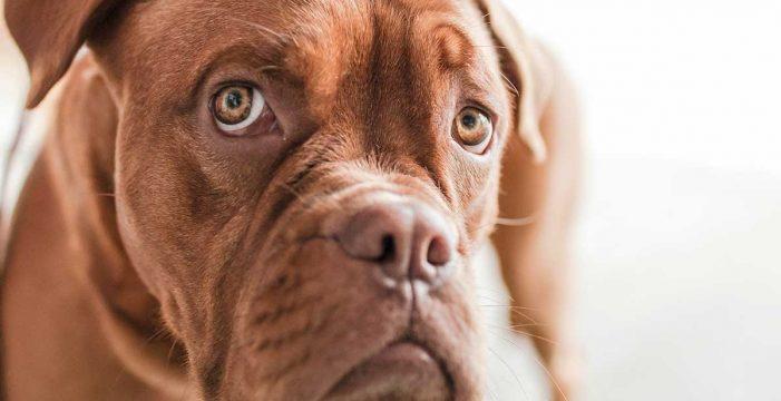 Los padres que maltraten a una mascota o amenacen con hacerlo no podrán compartir la custodia de sus hijos