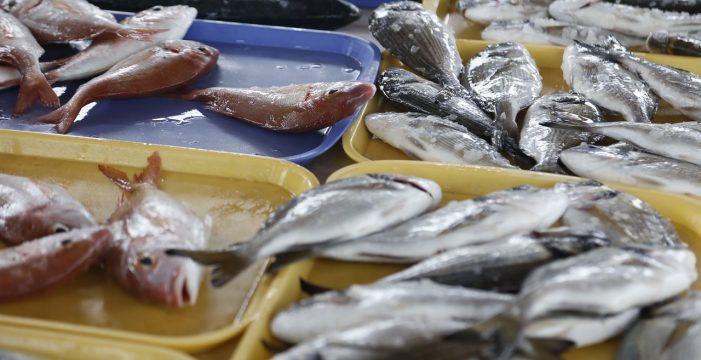 Dos de cada tres lubinas de Tenerife han comido plástico