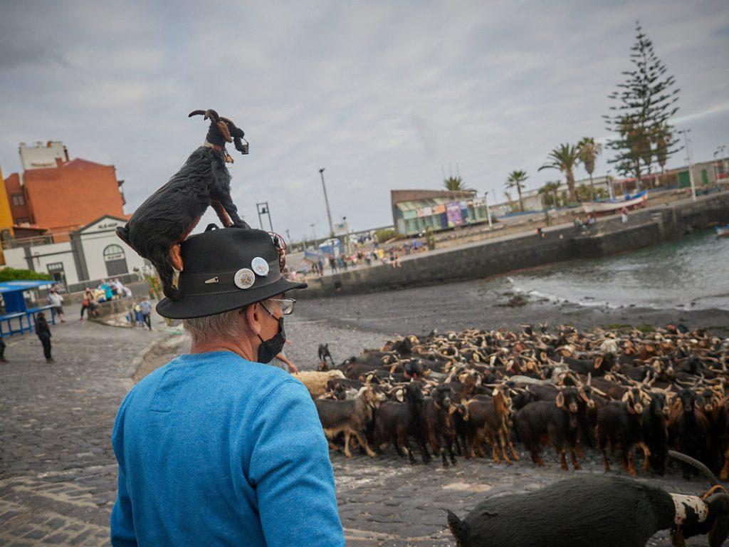Decenas de animales se concentraron ayer en el muelle del Puerto de la Cruz para celebrar un rito ancestral. Tony Cuadrado