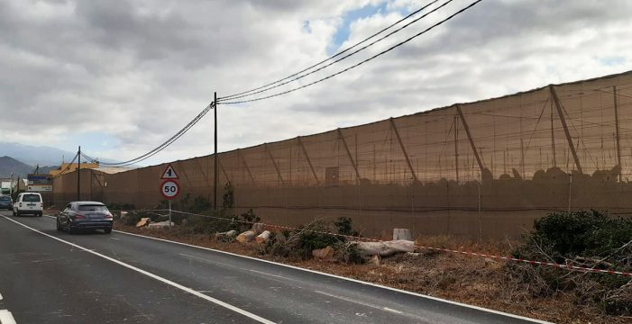 Arona exige un corredor verde al Cabildo tras la tala de árboles
