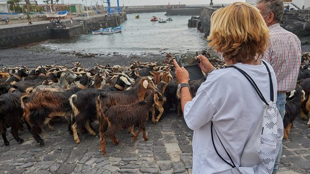 Las cabras vuelven a 'tomar' el muelle