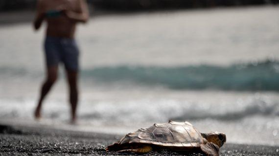 'SOS Tortugas Marinas': llamada de emergencia sobre la situación que sufren por la acción humana