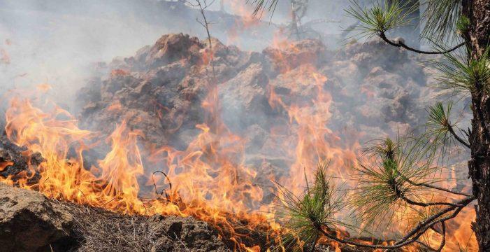 Los incendios serán más frecuentes en Canarias: ¿cómo adaptarse al cambio climático?