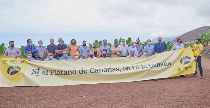 El sector del plátano rechaza la Ley de cadena alimentaria
