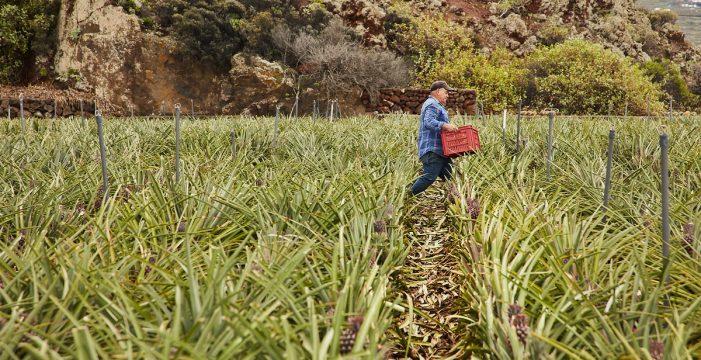 El estatus fitosanitario: eje clave en la preservación de la biodiversidad canaria