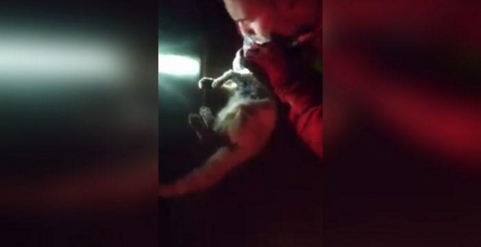 Un militar adopta al gato al que reanimó tras hallarlo asfixiado por cenizas