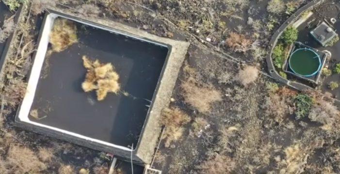 El 'Equipo A' dice haber salvado a los podencos del estanque