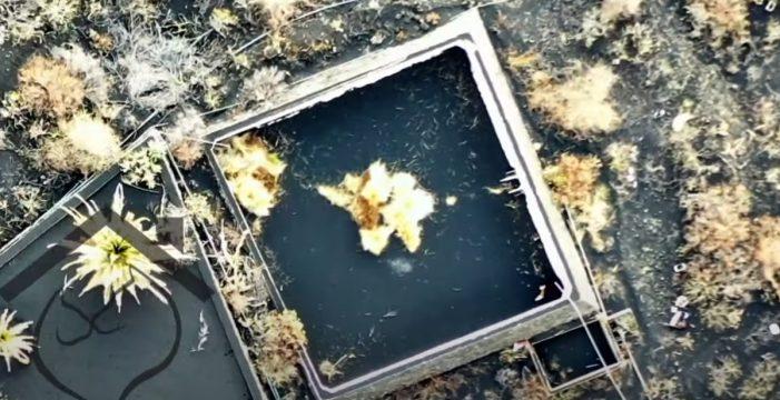 Elevan a cuatro los perros atrapados en estanques debido a la lava en La Palma