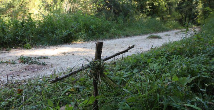 El canario asesinado en Francia luchó por su vida