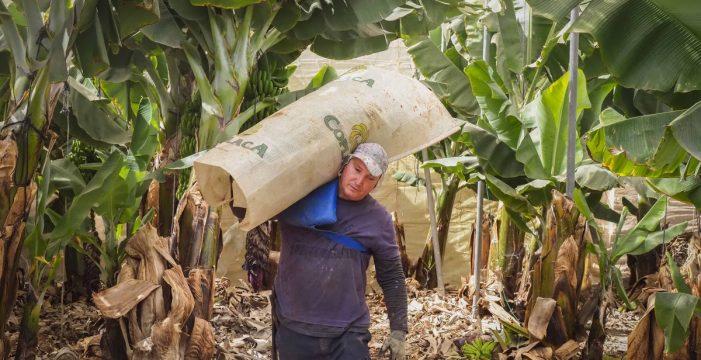 Los plataneros que quieren la protección de la Ley de Cadena Alimentaria